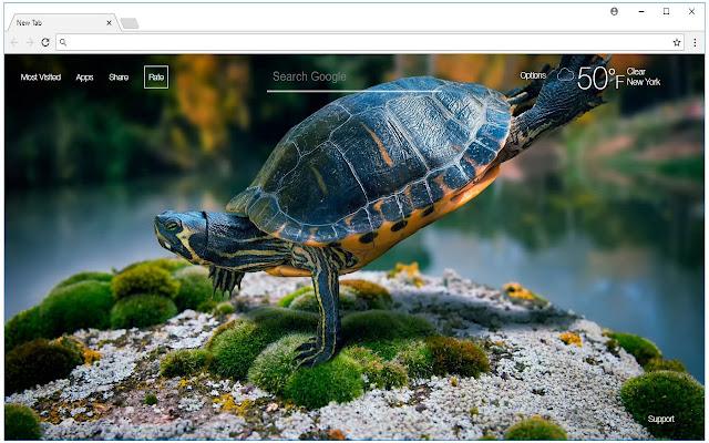 Turtle Wallpaper HD Turtles New Tab Themes - Free Addons