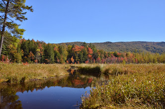 Photo: A bog surrounded by foliage at Lowell Lake by Linda Carlsen-Sperry.