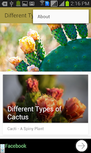 Different Types of Cactus - náhled