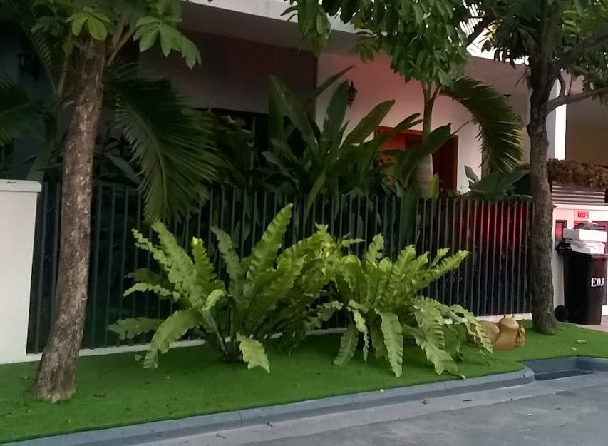 Khách hàng nên sử dụng tường Thảm sân vườn
