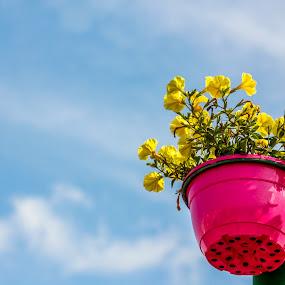 Yellow by Ebtesam Elias - Flowers Flower Arangements