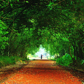 by Shatoddruh Saha - Landscapes Forests ( #road, #indianphotography, #nikon, #forests, #landscape, #green )