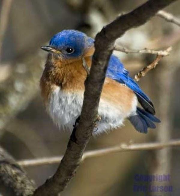 Bluebirds Favorite Winter Treat Recipe