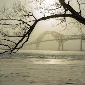 the bridge and the tree by Gigi Kent - Black & White Landscapes