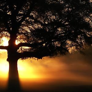 Part IV Miscellaneos pix (best sunrise shots) 076.jpg