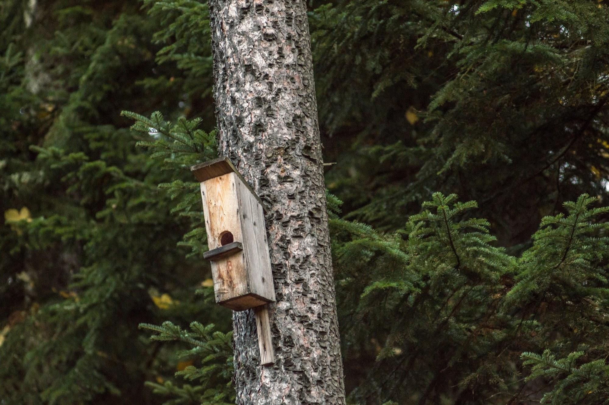 Шпаківня Мшанське Лісництво