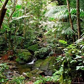 Relaxing Rainforest Sounds