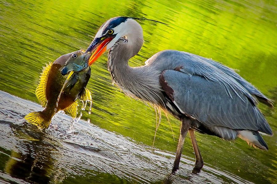 Eye to Eye by Ron Meyers - Animals Birds