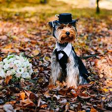Wedding photographer Evgeniya Borisova (borisova). Photo of 14.10.2016