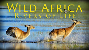 Wild Africa: Rivers of Life thumbnail