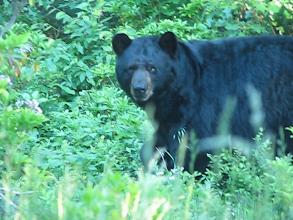 Photo: BEAR! FM19AW