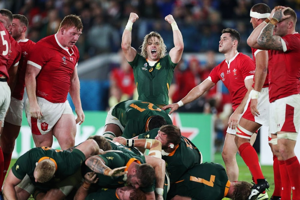 GAVIN RICH: Why the Boks have a 50/50 chance to win World Cup
