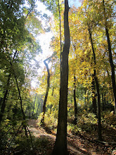 Photo: Golden path up a hill at Hills and Dales Metropark in Dayton, Ohio.