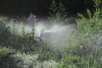 Photo: Watering our flower garden 06/08