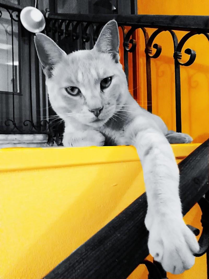 Gatto in giallo di Paola Lucchi