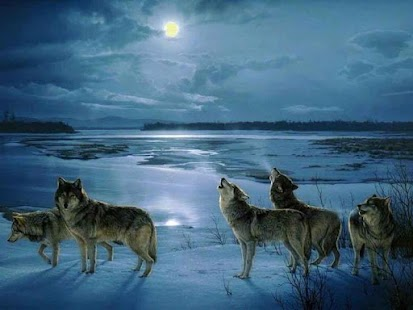 Wolf Barking Sound - náhled