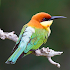 World Birds Sounds Free