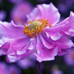 Flowerpwoe by Britta Rogge - Flowers Single Flower ( flower up close, nature, blume, flower photography, flower )