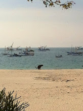 Photo: Dog doing its business on the beach, Los Organos, Peru.  June 2012.