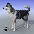 Snow Dog Survival Simulator APK