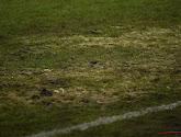 🎥 Match interrompu par ... un serpent sur le terrain en Russie