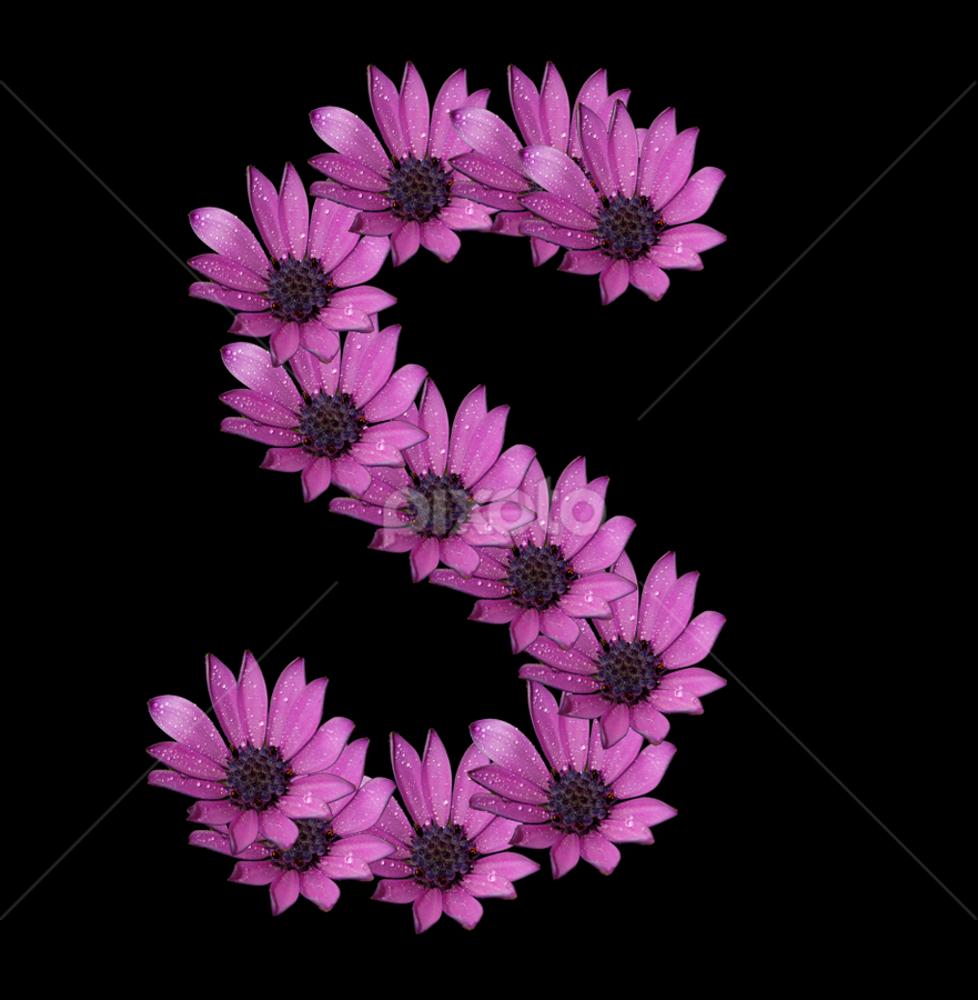 Alphabet - S by Dipali S - Typography Single Letters ( optical, optics, illustration, motivation, daisy, type, decor, inspiration, nature, calligraphy, card, place, flower, template, element, text, creative, letter, font, art, label, calligraphic, sign, frame, poster, word, typography, letters, headline, graphic, ornate, decorative, dew, captioned, title, words, quote, inscription, rain, classic, note, banner, typographic, abstract, icon, purple, vintage, decoration, advertisement, photo, message, motivational, s, typo, background, artistic, drops, design )