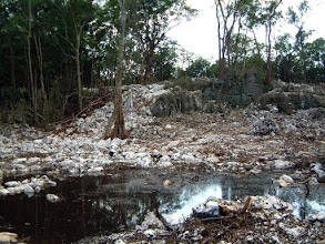 Photo: 2002 Ridge cleared for housing, Ironwood Forest, Grand Cayman, (July St, Windsor Park) Dec. 22, 2002
