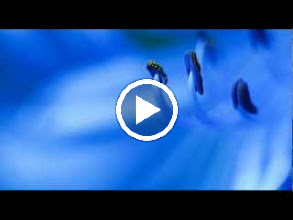 Video: A. Vivaldi  Concerto for bassoon, strings   b.c. in G minor (RV 495) -