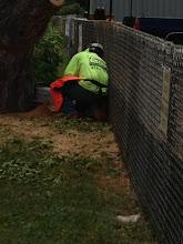 Photo: Cutting the remaining stump