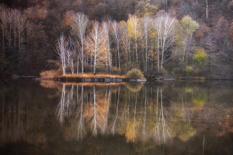 Specchio d'acqua di Barbara Surimi