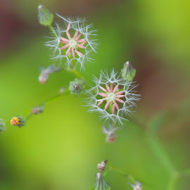 by Simon Yue - Flowers Flowers in the Wild