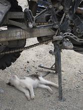 Photo: Karakol - przegląd bestii.