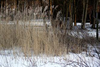 Photo: Nach tagelangen zweistelligen Minusgraden und weiterhin klirrendem Frost sind große Teile des Großensees zugefroren.