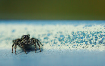 Photo: For #SpiderSunday, curated by +Kjetil Greger Pedersen and +Chris Mallory.