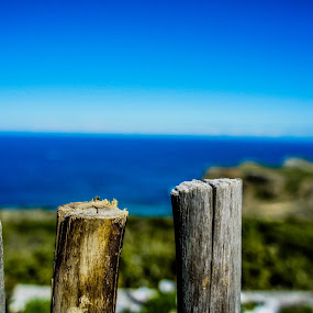 Wooden Fence by Ravi Patel - Nature Up Close Trees & Bushes