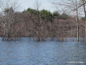 Photo: Submerged Borden Pond trail