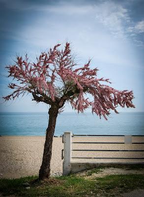 Il mare ad aprile... di rosy_greggio