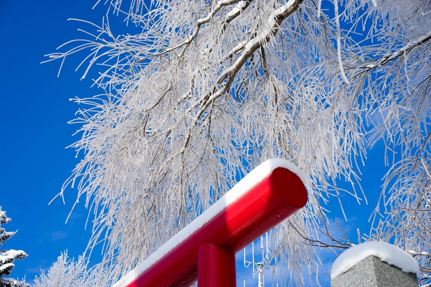 碧水神社の柳の木