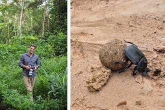 Photo: Terrence finds a dung beetle scuttling along the road