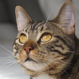 Good Kitty by Lori Fix - Animals - Cats Portraits