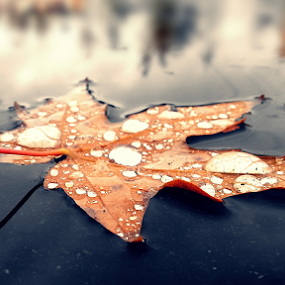 fall by Todd Reynolds - Nature Up Close Leaves & Grasses ( fall leaves on ground, fall leaves,  )