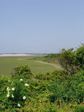Photo: View from the Town Marsh inner loop nature trail. The trailhead is located directly across Taylor's Creek from the Maritime Museum Watercraft Center. Follow the markers with the green tops for inner loop - blue tops for the outer loop. Cross over to Bird Shoal from the southeast edge of the trail. There is also another access point located a few miles east - the Carrot Island boardwalk. Call the site manager with any questions 252-838-0886.