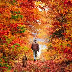 Fall Walk by Melissa Connors - City,  Street & Park  City Parks ( park, colorful, autumn, leaves, dog, walk, man,  )
