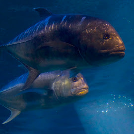 Fishies by D. Bruce Gammie - Animals Fish ( fish, maui, water, delicious, aquarium )