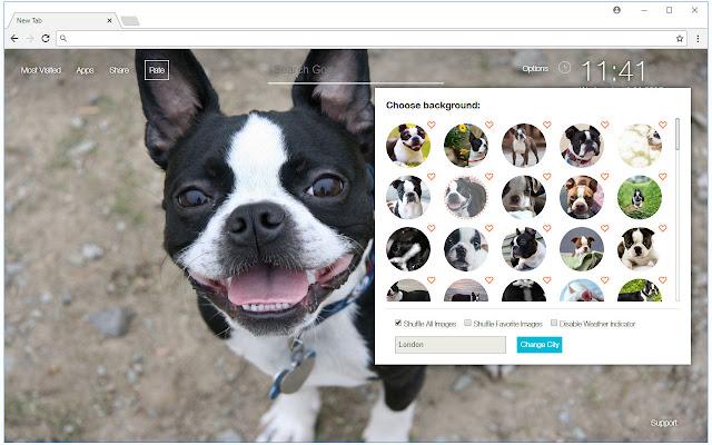 Boston Terrier Dogs Wallpapers Custom New Tab