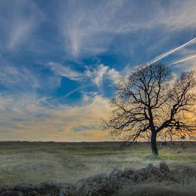 Under the Old Oak by Michael Mercer - Landscapes Prairies, Meadows & Fields