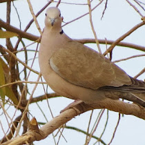 Al Madinah Al-Munawarah wildlife