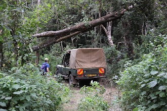 Photo: getting the vehicles through the thick forest  - to and fro to campsite 2.
