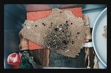 honingraat op een tafeltje