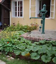 Photo: na další podzim zahrada kvete a plodí